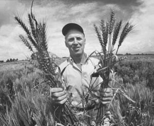 Norman Borlaug in Mexico. 1970. LIFE Magazine photo.